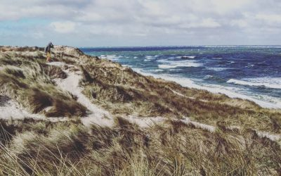 8 Gründe warum es sich lohnt mit Südkap Surfing deinen Sylt Sommer zu verbringen